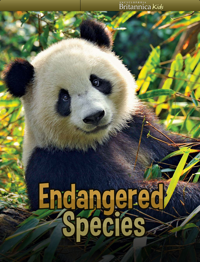 endangered planet essay In this activity, students learn how to define endangered species and explore threatened animals and plants around the world through playing endangered species bingo.