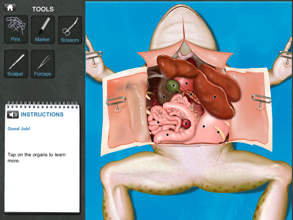 Frog Dissection Screenshot